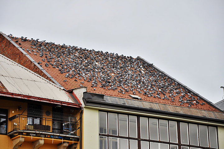 A2B Pest Control are able to install spikes to deter birds from roofs in Eltham.
