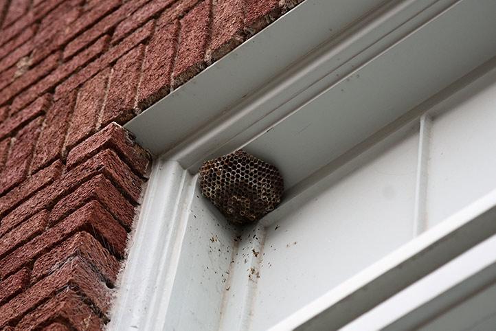 We provide a wasp nest removal service for domestic and commercial properties in Eltham.